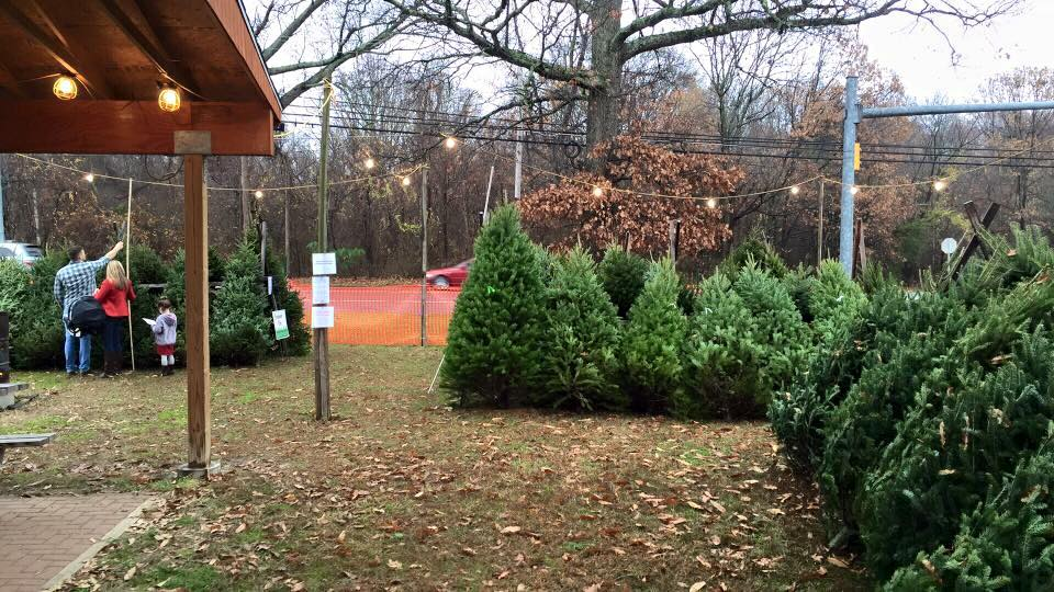Picture of Christmas Tree Lot